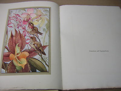 DETMOLD. HOURS OF GLADNESS. 1912 1st EDITION. VELLUM BOUND BY JOHN MITCHELL