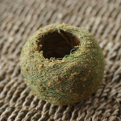 Moss Ball BONSAI KOKEDAMA Natural Green Sphagnum Moss Substrate Home Decoration