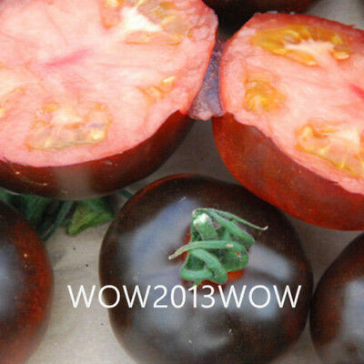 120pcs Super Affordable Indigo Rose Black Tomato Seeds Fruit Vegetable Seeds