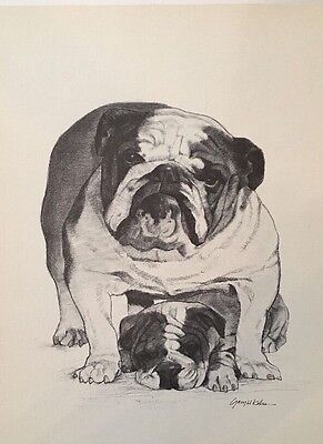 BullDog Puppies Print, Fine Details And Expression AKC Dogs Drawn By Fine Artist