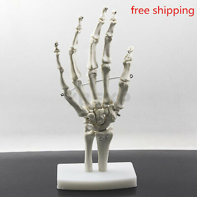1:1 NEW Hunam Hand Model Human Hand Joint Skeleton Model For School Learning