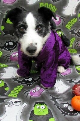 Dogs Halloween Fancy Dress jumpsuit purple with spiders Bandana by Mrs Nibbles