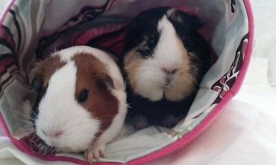 Chucklebunnies Guinea pig house bed for 2, lovely comfy pink fleece