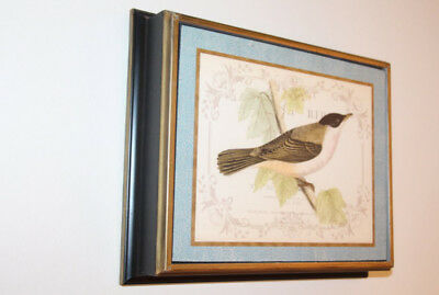 Framed Bird wall prints (set of 4)