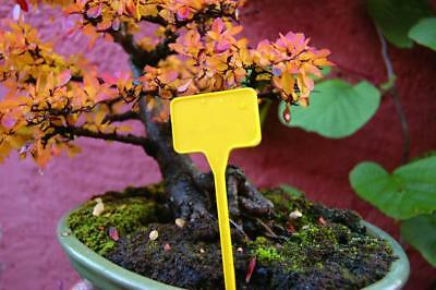Labels Yellow to Planter T Shape Sting Garden Plant Seeds Plastic 15cm