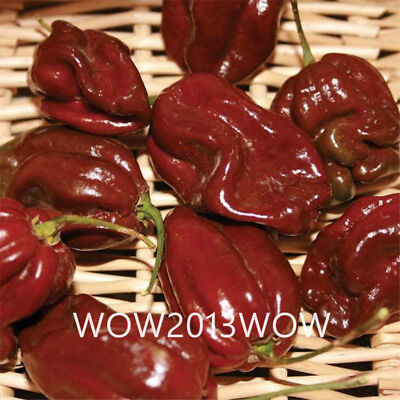200pcs Chocolate Habanero Seeds Rare Chili Pepper Seeds Vegetable Seeds Bonsai