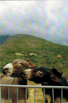 KISS ME TENDER Donkey gives a kiss to another donkey Modern Russian postcard