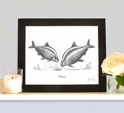 BREAM Fishing Fish Art Print Drawing Picture MOUNTED Present Gift For Angler