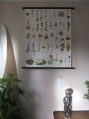 Vintage Pull  Roll Down Botanical School Wall Chart  Poster Of Protected Flowers
