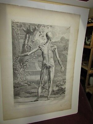 Large Antique Old Master Medical Anatomy Engraving by C Grignion , Londini 1748