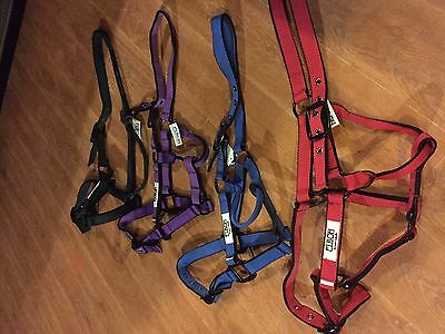 Horse Halters bundle of 4 price reduced