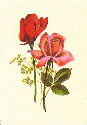 1959 (or earlier) Soviet Russian postcard TWO RED ROSES