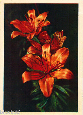 1959 Russian card RED LILLY