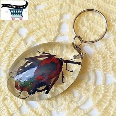 Real insects in a resin frame - Key chain Insect Jewelry Taxidermy Ideal Gift