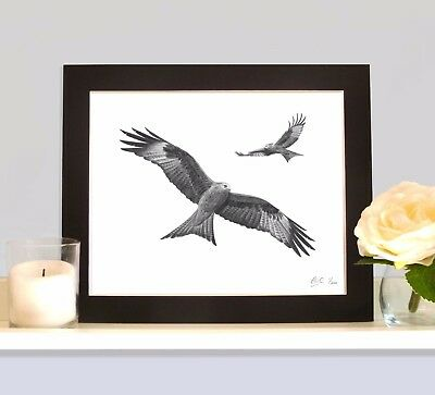 RED KITES Birds of Prey Art Print Drawing Picture MOUNTED Handmade Wall Art