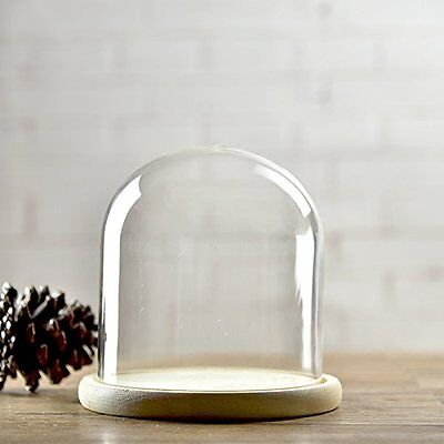 Clear Glass Dome Cloche Cover Display Stands wooden base  D-5.9 H-7