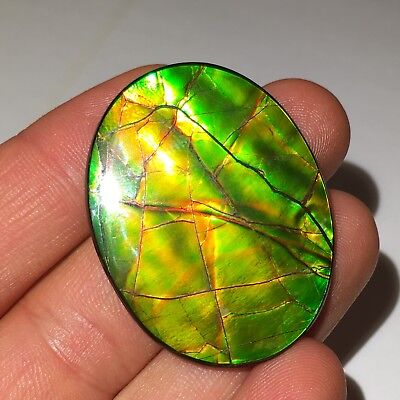 Top Quality 45.4cts AMMOLITE Oval from Alberta, Canada