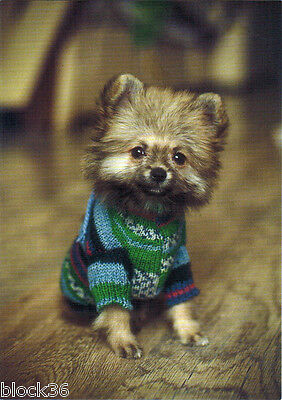CUTEST PUPPY IS READY FOR COLD WINTER - HAS NEW SWEATER Modern Russian postcard