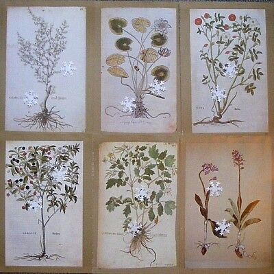 "VTG Botanic Print Lot SET 6X Antique Repro * * * 8.5"" x 12"" * * * SEE VARIETY"