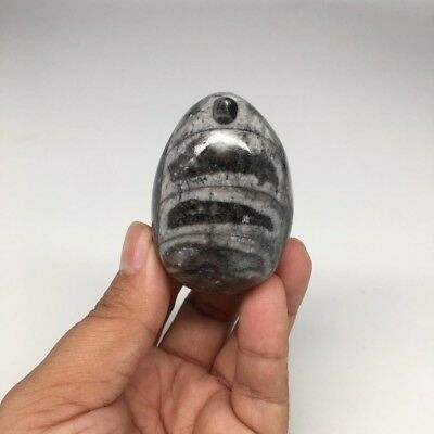 """133.1g, 2.2""""x1.6"""" Hand Polished Fossil Orthoceras Stone Egg from Morocco,FE87"""