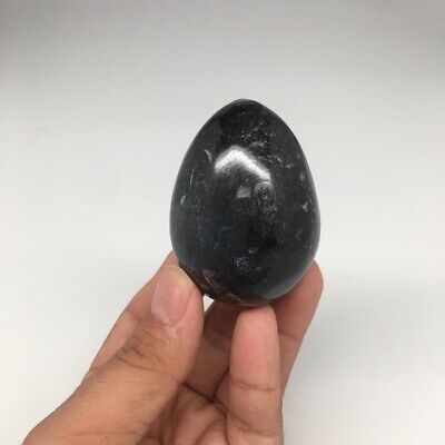 "152.2g, 2.3""x1.7"" Hand Polished Fossil Orthoceras Stone Egg from Morocco,FE61"