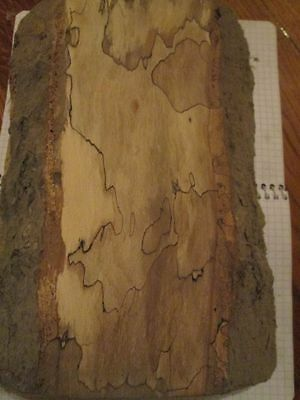 Big board BEAUTIFUL spalted beech turning block lumber, knife scales crafts