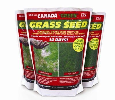 Canada Green Grass Seed, 500 Grams