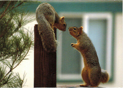 IS IT LOVE? OR CONFLICT? TWO SQUIRRELS WATCH EACH OTHER Modern Russian postcard