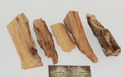8 oz Palo Santo  Holly Wood Incense Raw
