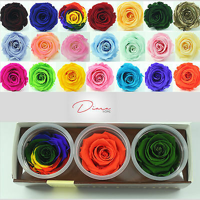 3 Orange Rainbow Green Rose Preserved 100% Fresh Natural Flower last to 3 years