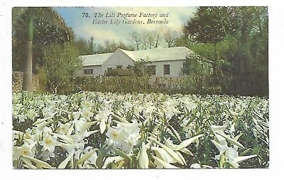 Bernuda - Lily Perfume Factory and Easter Lily Gardens