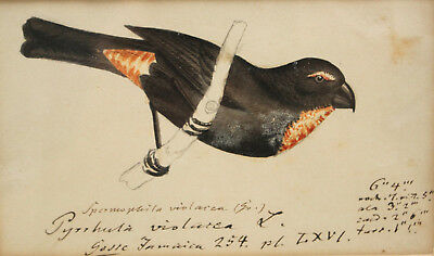 Original Heinrich Gottlieb Ludwig Reichenbach Ornithological Watercolour, 1830