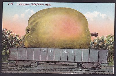 1910 Vintage Postcard Exaggerated Belleflower Apple SPRR South Pacific Railroad
