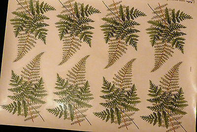 CERAMIC DECALS  FERNS 646214 8 ON A SHEET15cmLONG 10cm WIDE RIGHT PRICE