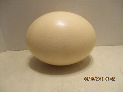 Craft Oval Creme Empty Egg Shell Hole at Bottom Ostrich Egg  for Decorating #2