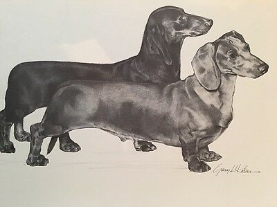 Dachshund Black And White Print 11x14 Limited Edition