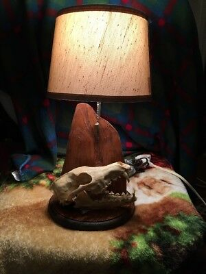 REAL coyote skull lamp