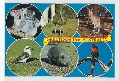 Greetings From Australia - Vintage Postcard