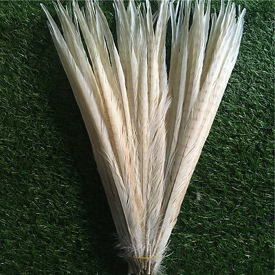 Wholesale 10-200pcs White natural pheasant tail feathers 25-55cm / 10-22inch