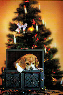 CHRISTMAS PUPPY Somebody got gorgeous Beagle as a gift Modern Russian postcard