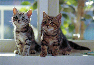 Two cutest and very curious kittens Modern Russian postcard