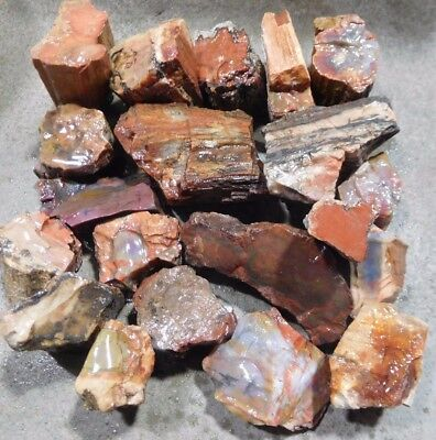 Arizona Rainbow Petrified Wood-10+ Lbs--14 PC