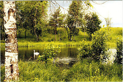 RUSSIAN LANDSCAPE SCENE WITH SWAN ON THE POND Modern Russian postcard