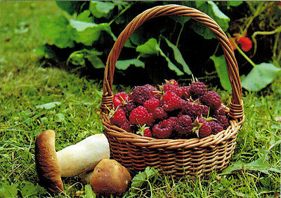 TREASURES OF THE FOREST: BERRIES AND MUSHROOMS Modern Russian postcard