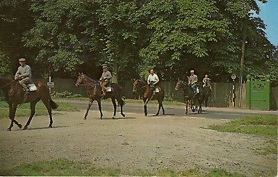 Horse Postcard - Racing - Newmarket Heath - Racehorses - Used Good Condition