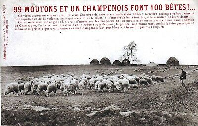 89 - 99 Moutons Et 1 Champenois  ... Animee