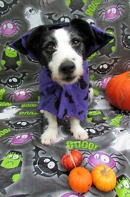 Dogs Halloween Fancy Dress Costume purple bat Cape by Mrs Nibbles