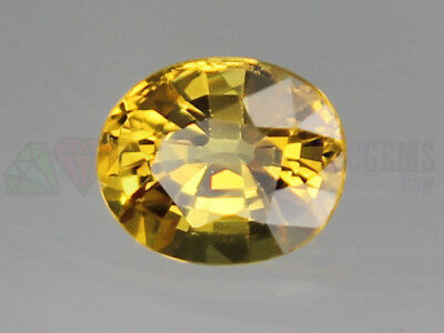 Ceylon Yellow Sapphire VS 8x7mm Oval 2.22ct Loose Natural Gemstone Sri Lanka