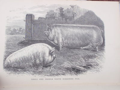 The Pork Trade,   1893   illustrated  manual 100 pages