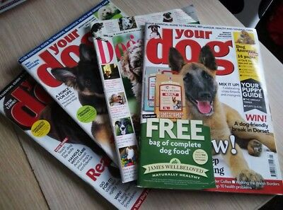 Your Dog 4 x  issues and dog grooming guide book